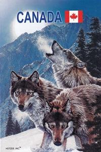Fauna - Wild animals